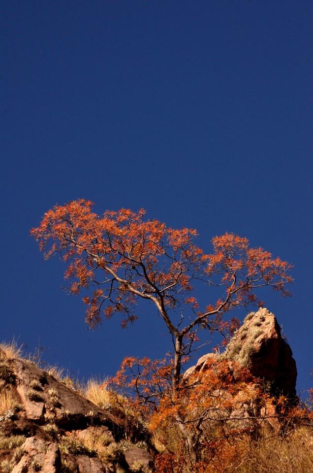 Explota el otoño - Foto: Hernán Ortega.